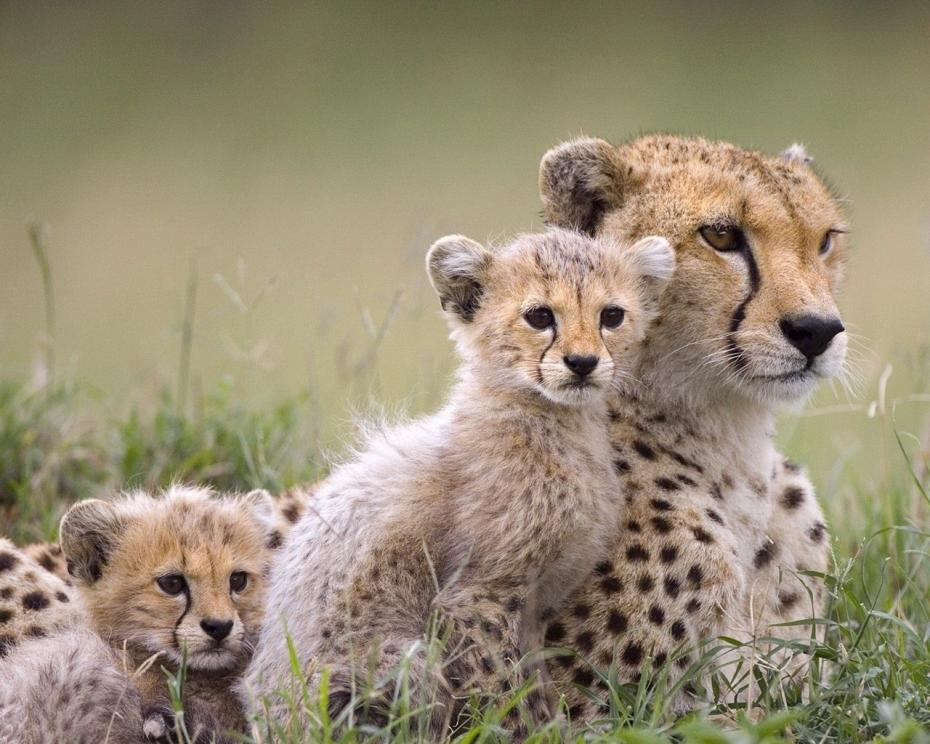 hd-wallpaper-animals-wild-animals-baby-animals-hd-wallpapers-by
