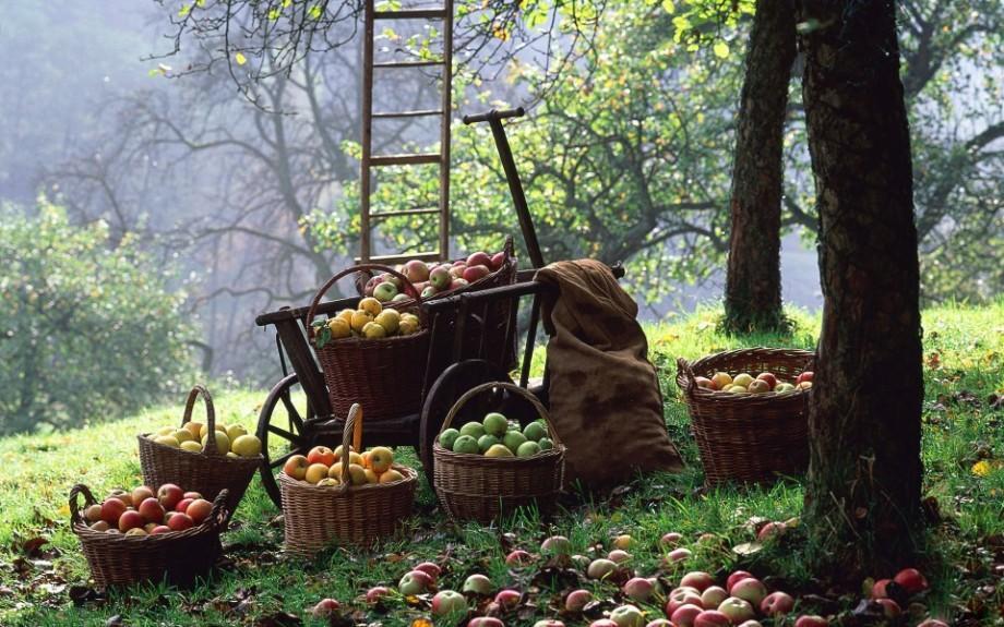 (video) Agricultura ecologică în Moldova. Cât de ecologice sunt merele de la bunelu'?