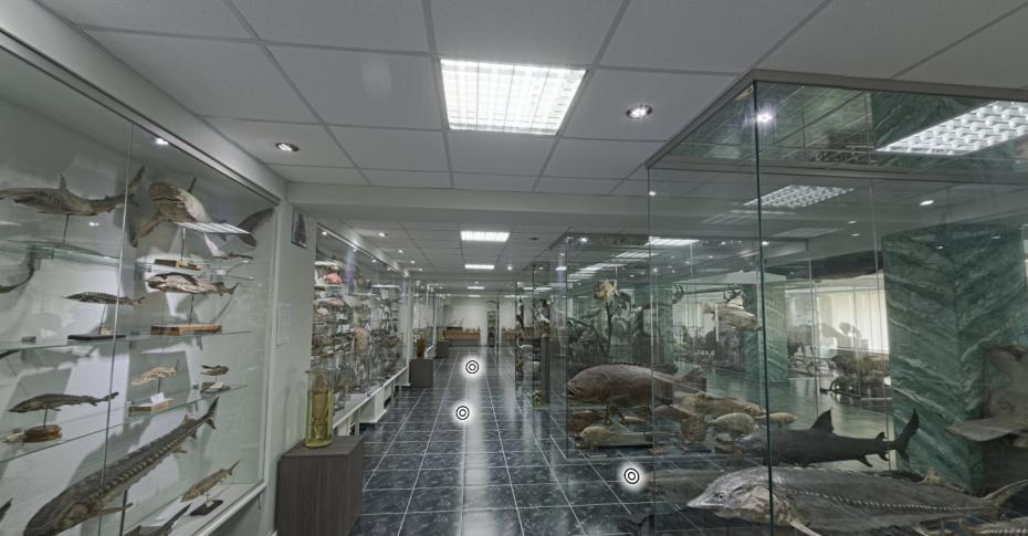 muzeu4