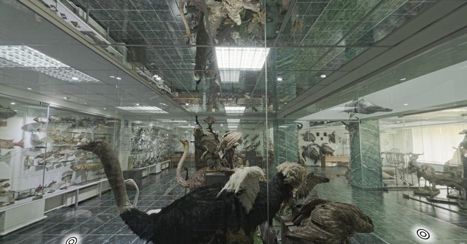 muzeu9