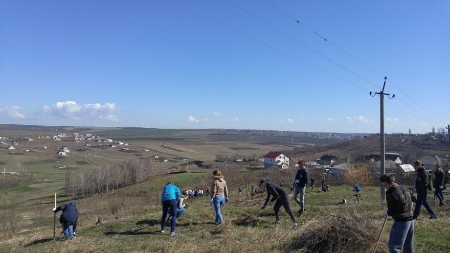 """(foto, video) """"Plantăm fapte Bune în Moldova"""". Peste 250 de voluntari au plantat 3.000 de puieți la Tohatin"""