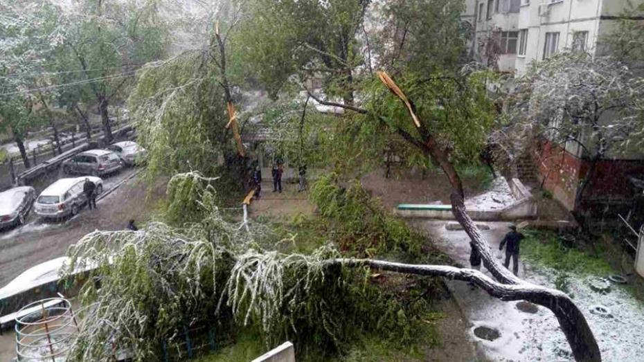 """(foto) În Chișinău """"ninge cu copaci""""! Mai mulți arbori au fost doborâți în urma ninsorii din aprilie"""