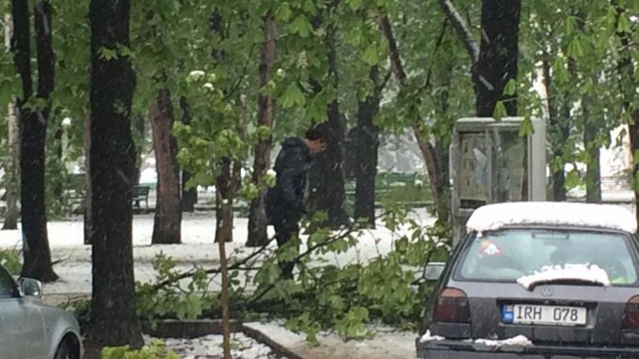 (foto, video) Singur în fața dragostei naturii: Dorin Chirtoacă strânge crengile rupte din parc