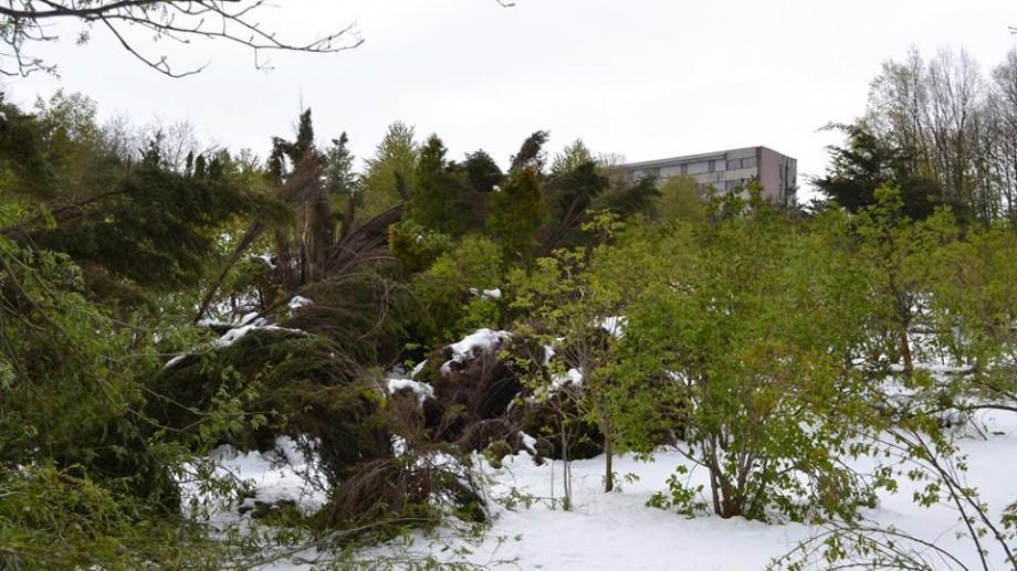 (foto) Cum arată Grădina Botanică după ninsoare după ce 80 % din arbori au fost doborâți