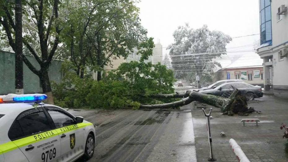 Recomandările poliției pentru șoferi și pietoni pentru a evita pericolele în urma ninsorii