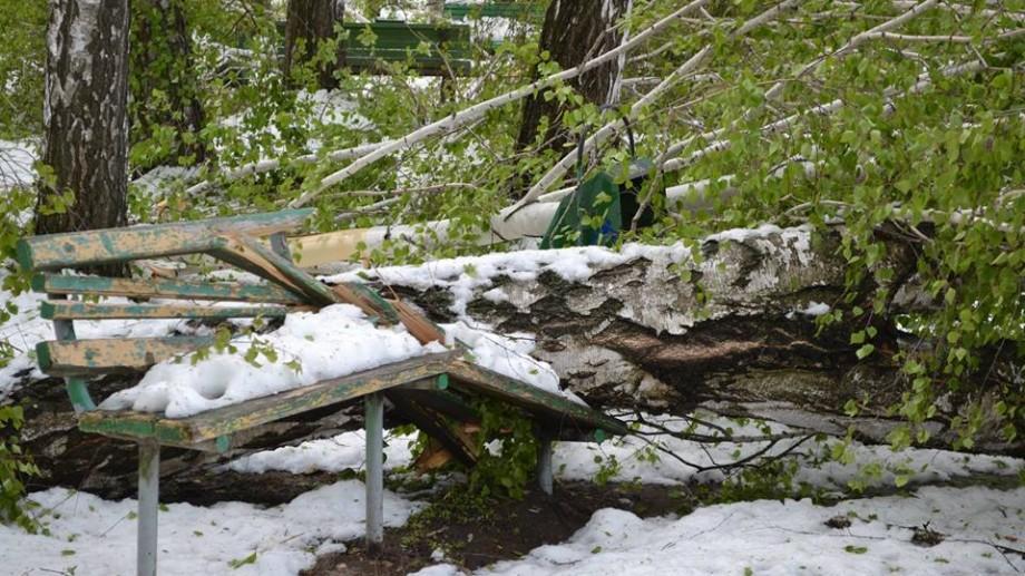 (foto) După dezastrul ecologic, conducerea Grădinii Botanice cere ajutorul cetățenilor. Cum poți contribui