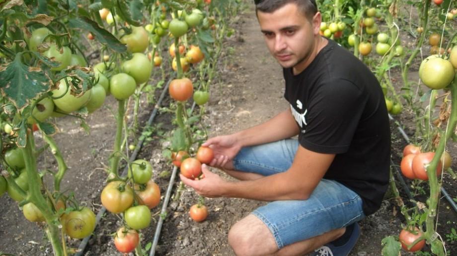 Tinerii pasionați de agricultură se pot înscrie la un program gratuit despre grădinăritul ecologic