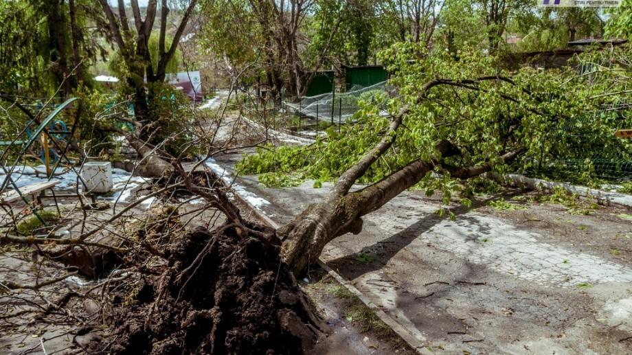 Un bărbat a decedat după ce a fost doborât de un copac în timp ce curățea o curte