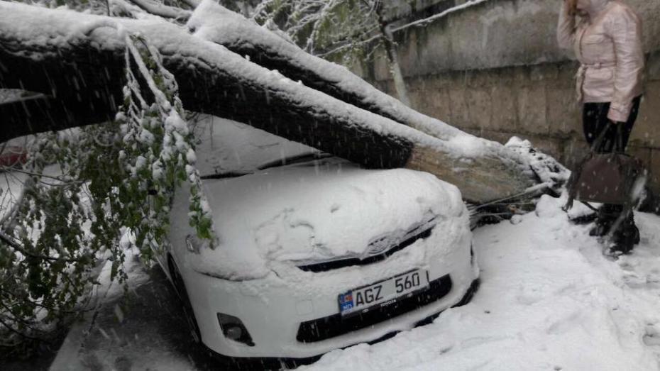 Începe numărătoarea pagubelor produse de ninsoare: 35 copaci, 7 mașini și 79 localități fără electricitate