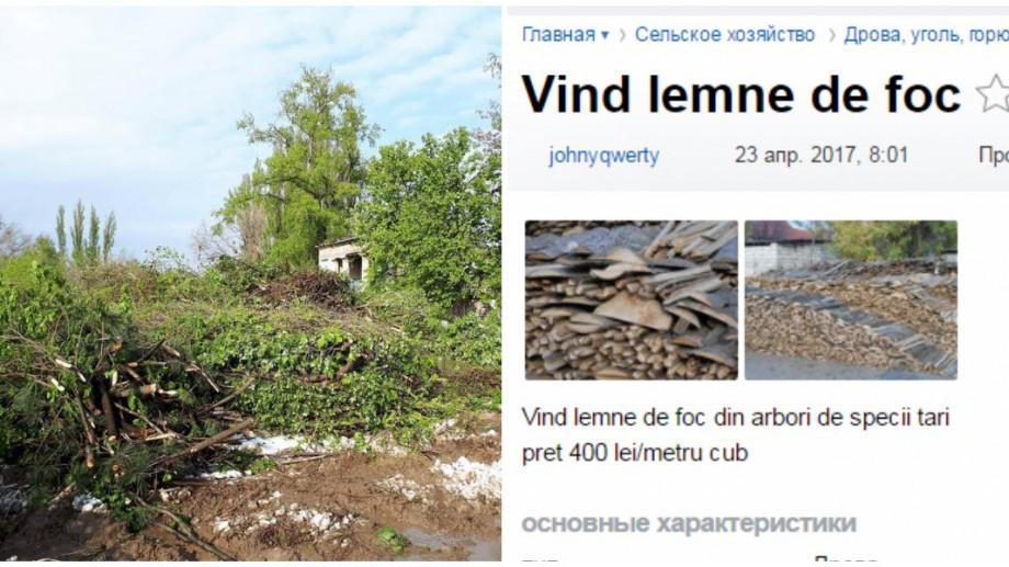 (foto) Depozitele celor de la Spații Verzi sunt goale în timp ce pe internet apar anunțuri cu lemne de foc