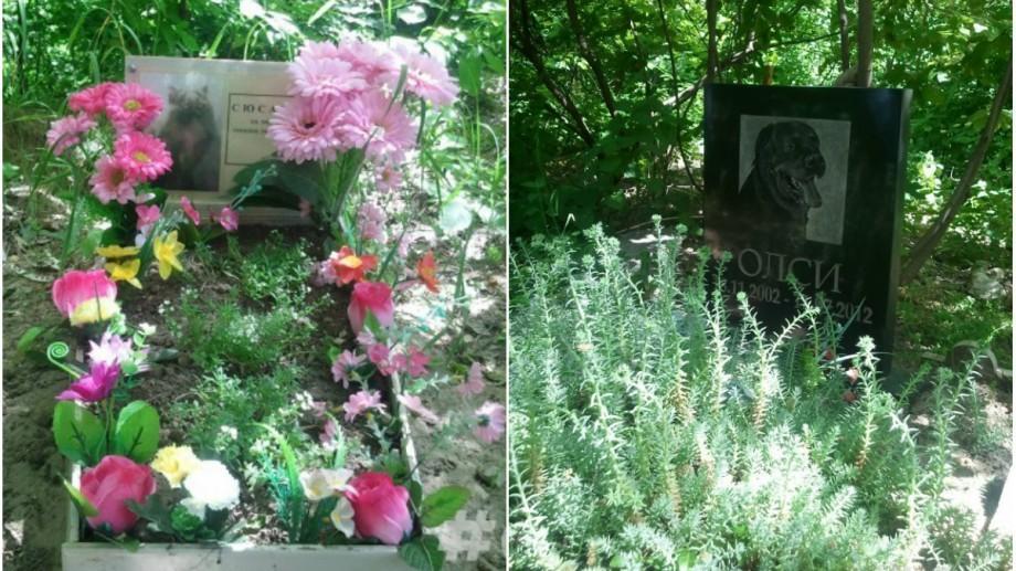 (foto) Cimitirul de animale de la Buiucani ar putea să dispară, iar pe locul lui să fie construit un bloc locativ