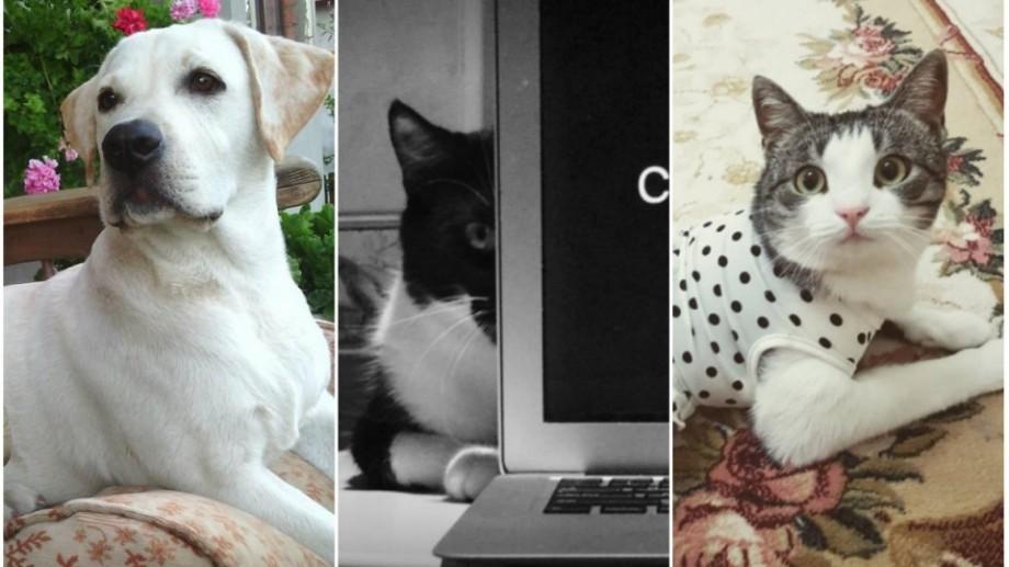 (foto) Cele mai mimimi profiluri ale animalelor de companie din Moldova (I)