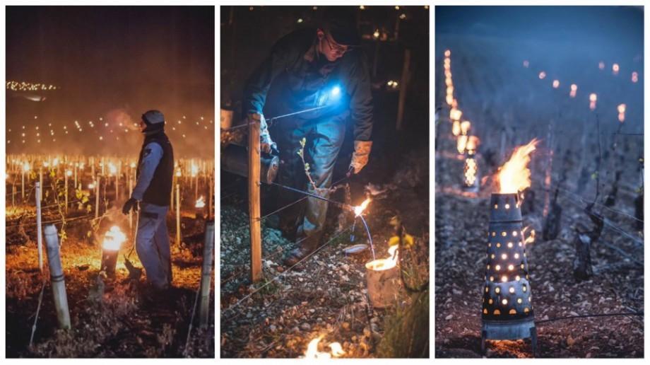 (foto) Un proprietar de vii din Franța a aprins mii de torțe pentru a-și proteja culturile de îngheț