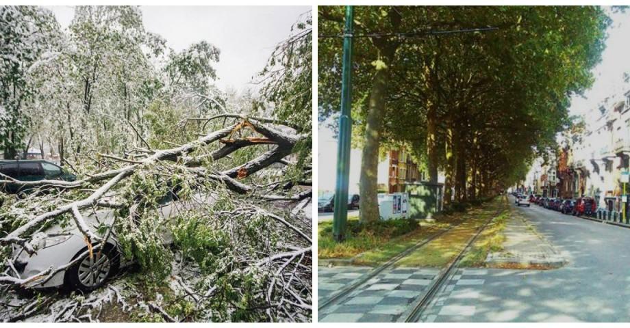 (foto) Victor Chironda, despre secretele silviculturii urbane sau ce să facem să nu cadă copacii