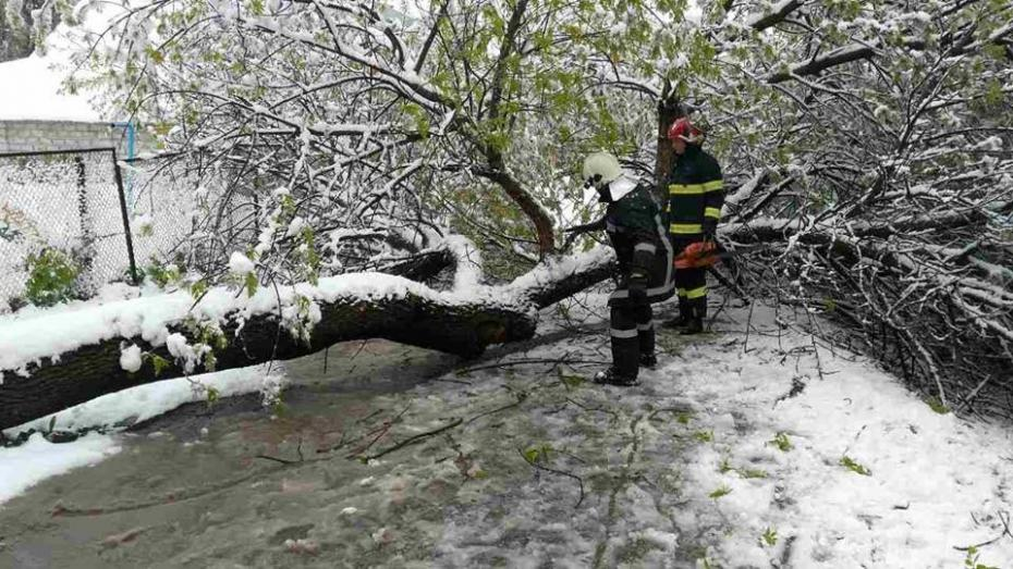 (video) După ce au căzut 1.600 de copaci, Primăria Chișinău a declarat stare de urgență în Capitală
