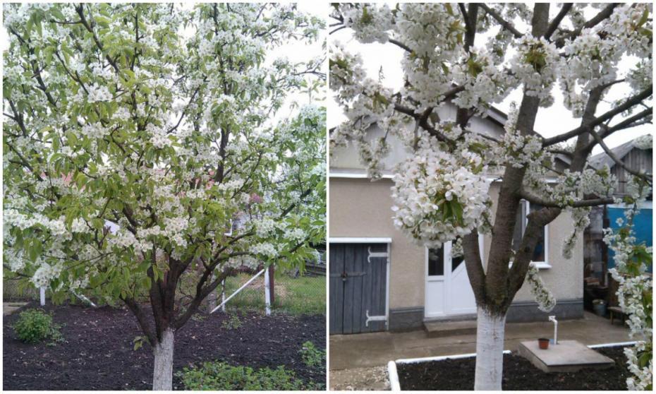 (foto) Aceeași țară, două anotimpuri: La nordul Moldovei e încă primăvară