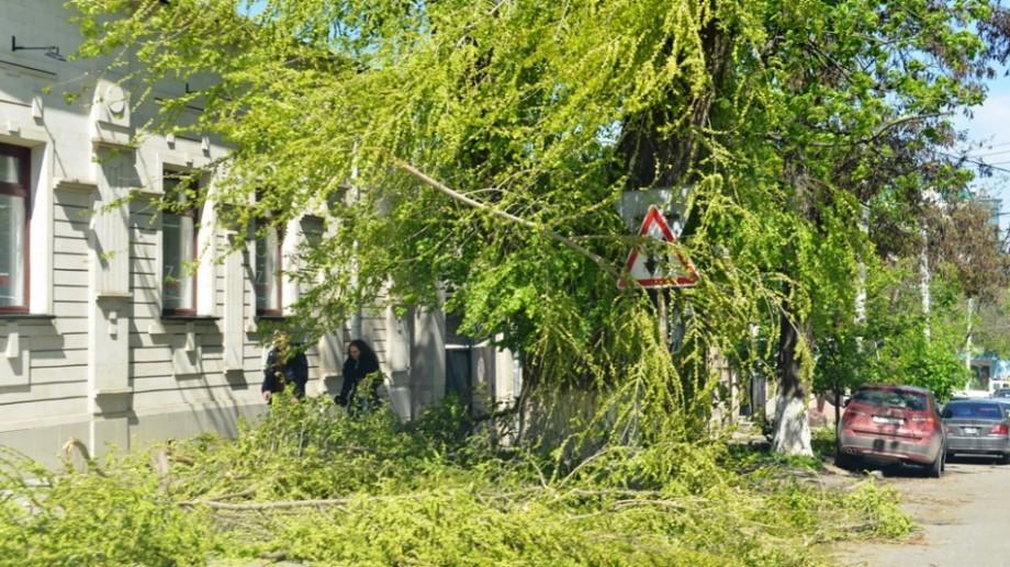 Detalii despre decesul bărbatului doborât de un arbore în timp ce curăța o curte