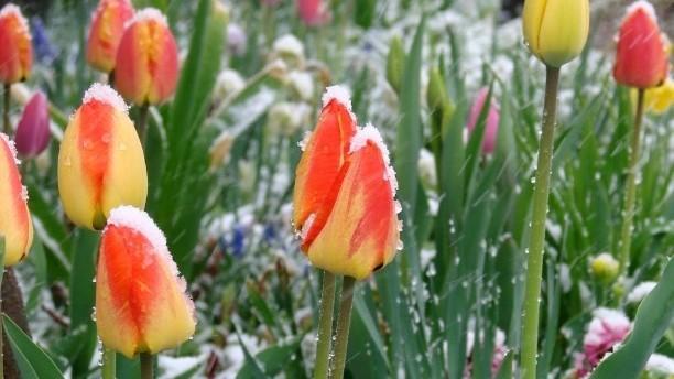 Cod Galben de frig și îngheț în plină primăvară! Prognoza meteo pentru următoarele zile