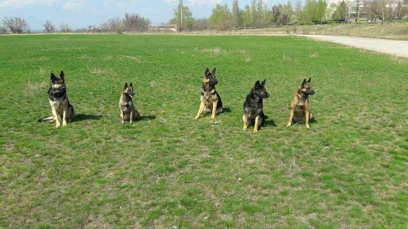 Diplome pentru câini din partea Poliției de Frontieră: Pentru ce merite au fost premiați Nero, Grom și Richard