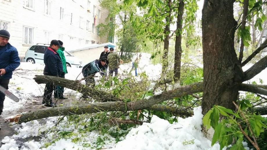 Pierderi în sumă de 70 de milioane de lei. Ce pagube s-au produs în Chișinău în urma ninsorilor din aprilie