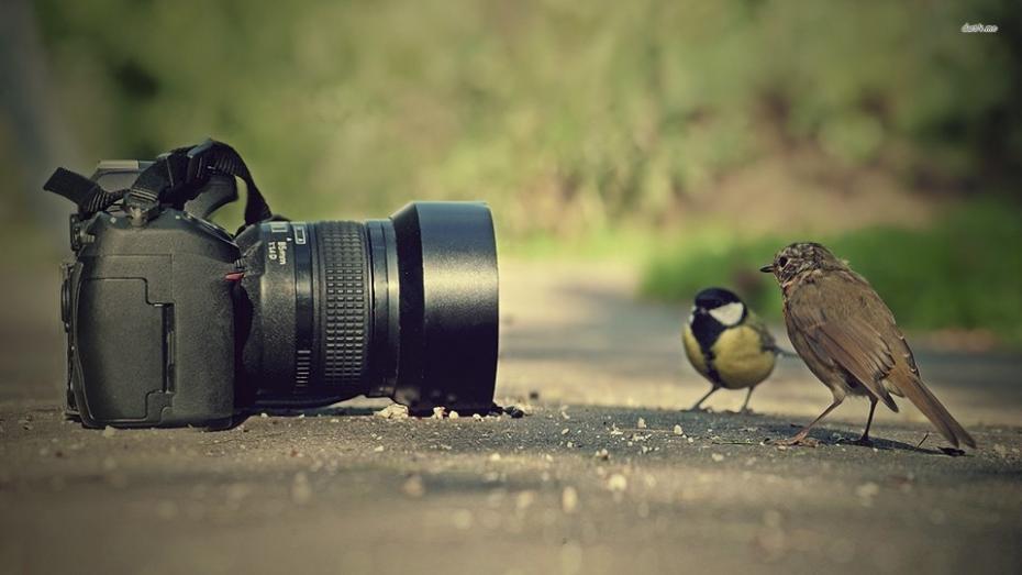 Oportunitate pentru cei pasionați de fotografie. Concurs cu tematica de mediu și sănătate