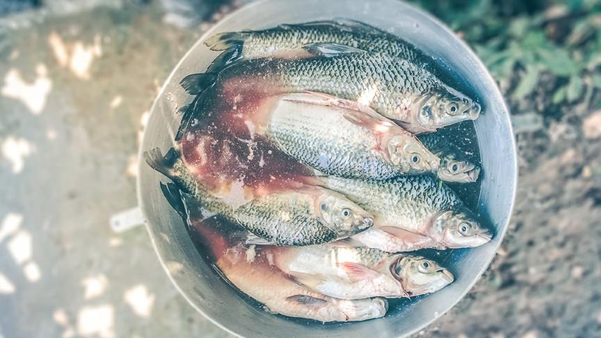 """Ateliere gastronomice și multă distracție. La Ialoveni va avea loc cea de-a doua Ediție a ,,Festivalului Peștelui"""""""