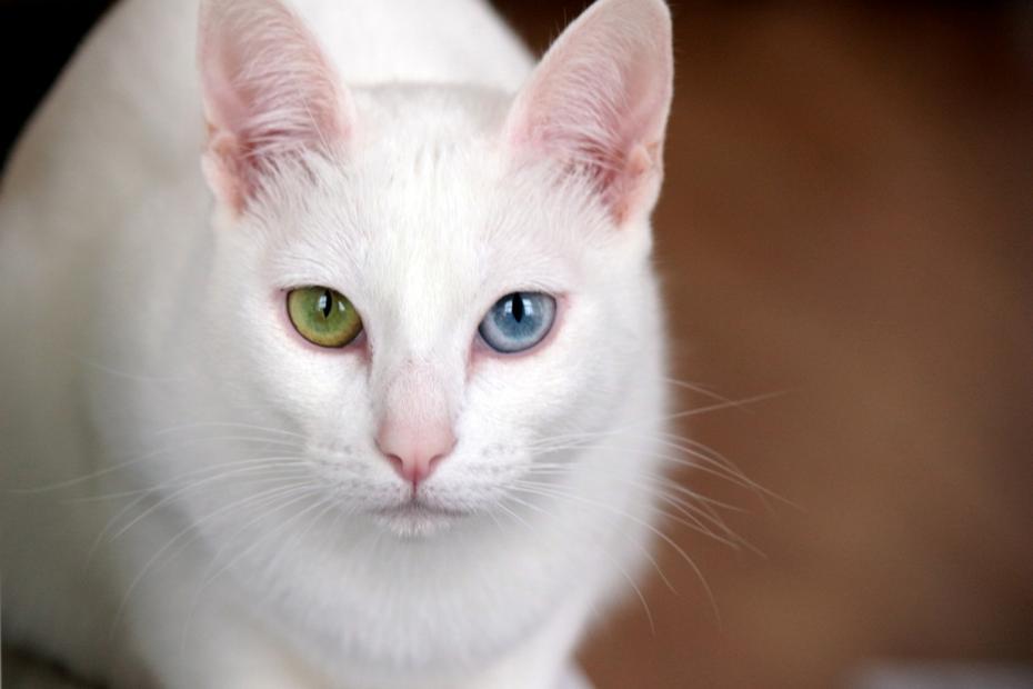 Photo Credit: kittydesires.com