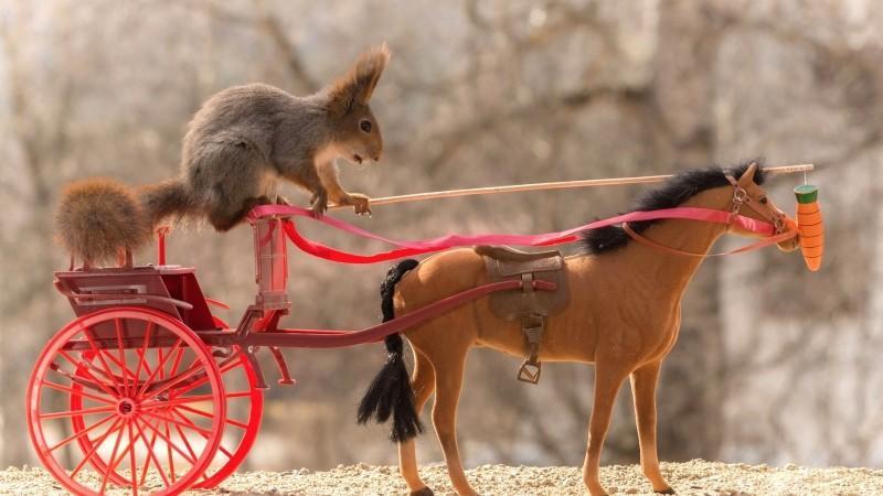 (foto) Fotograful care reușește să surprindă veverițele în diverse ipostaze amuzante