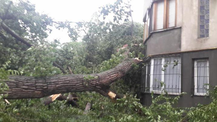 Situația în Chișinău după furtuna de vineri: Au fost afectați peste 130 de copaci și au fost rupte 10 fire electrice