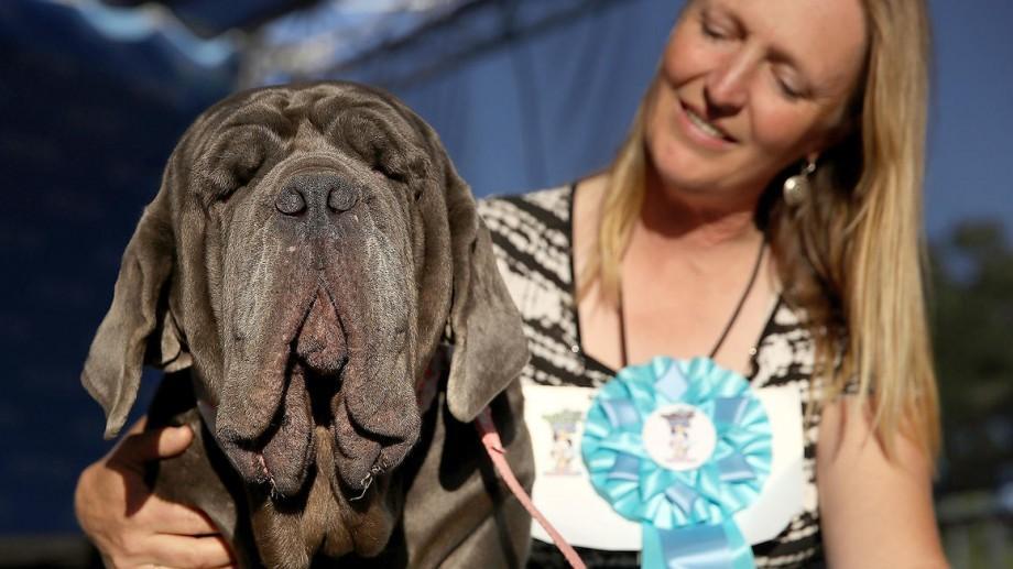 Martha, o femelă de mastiff napoletan, desemnată cel mai urât câine din lume în 2017