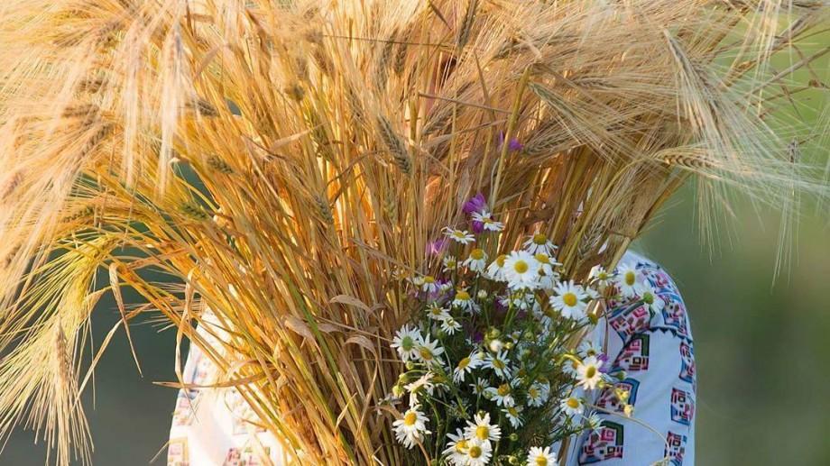 (foto) Internauții au migrat din lanurile de levănțică în cele de grâu. Vezi cele mai faine postări din câmpurile aurii