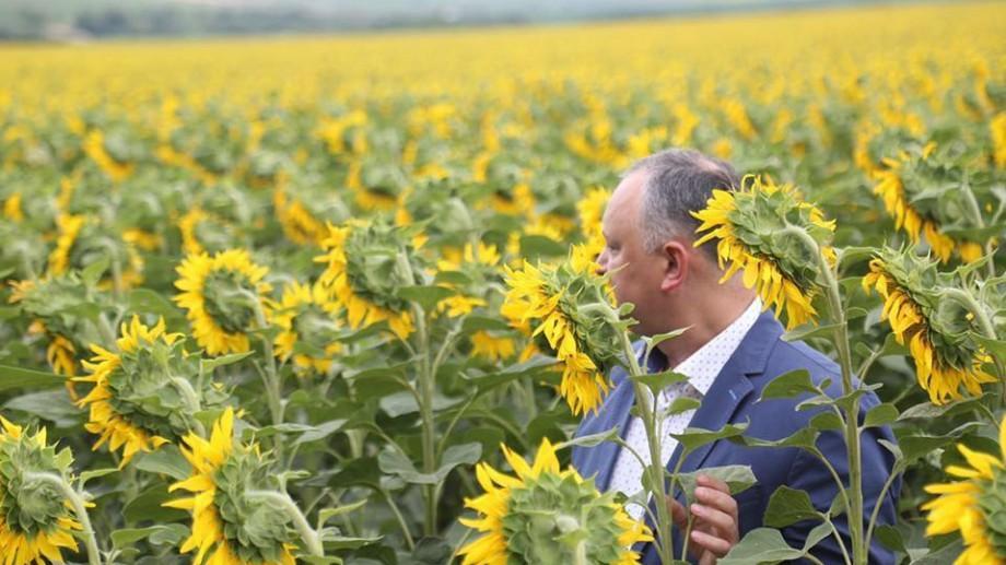 (foto) Mai multă lumină pe rețelele de socializare sau cum au migrat internauții în lanurile de floarea-soarelui