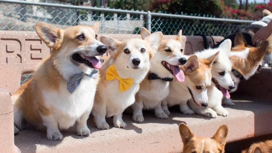 (foto) Care sunt cele mai căutate rase de câini pe Google