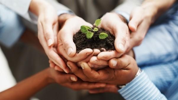 44 de întreprinderi vor obține finanțare în cadrul programului PARE 1+1. 68 % sunt afaceri în agricultură