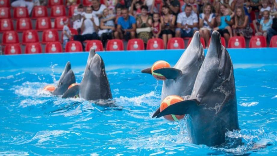 Losing Nemo. Unicul delfinaru din Chișinău se închide