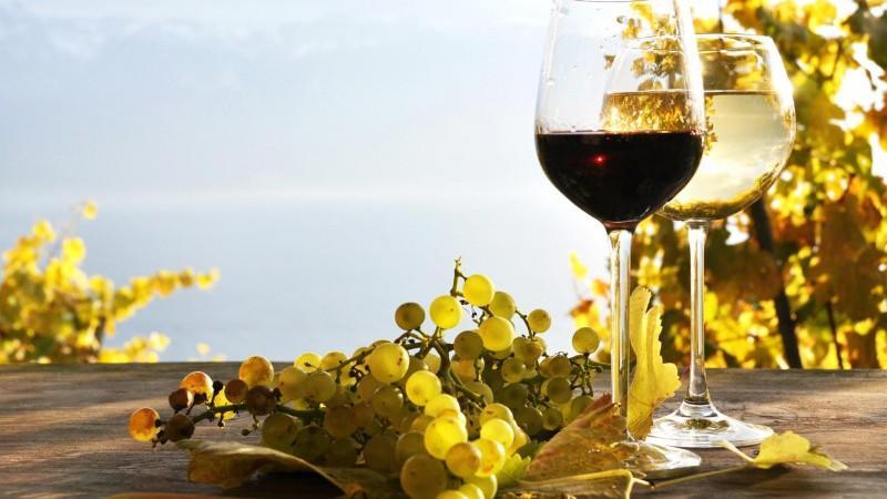 Vinul Moldovei în cifre. Află tot ce trebuie să știi despre sectorul vinicol