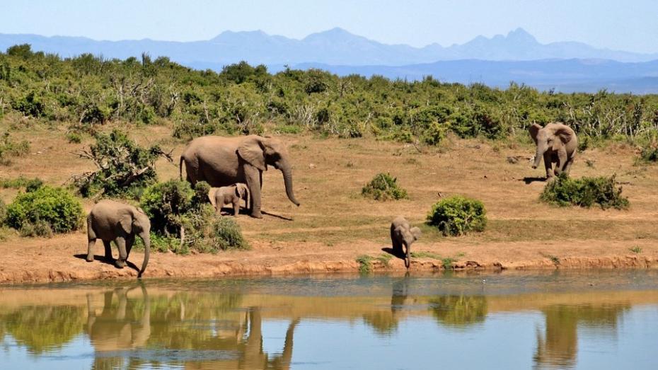 (foto) Astăzi sărbătorim Ziua elefantului. Lucruri curioase despre această specie
