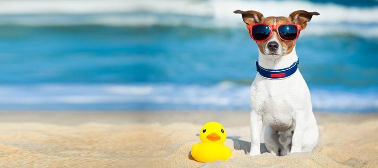 """""""Era prea mult nisip pe plajă"""": Care sunt 20 cele mai bizare reclamații lăsate de turiști agențiilor internaționale"""