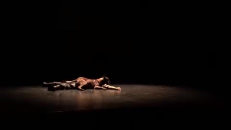 """(video) Laky, Patrupedul Poliției de Frontieră, a jucat în piesa de teatru """"Woyzeck"""". Iată cum a evoluat"""