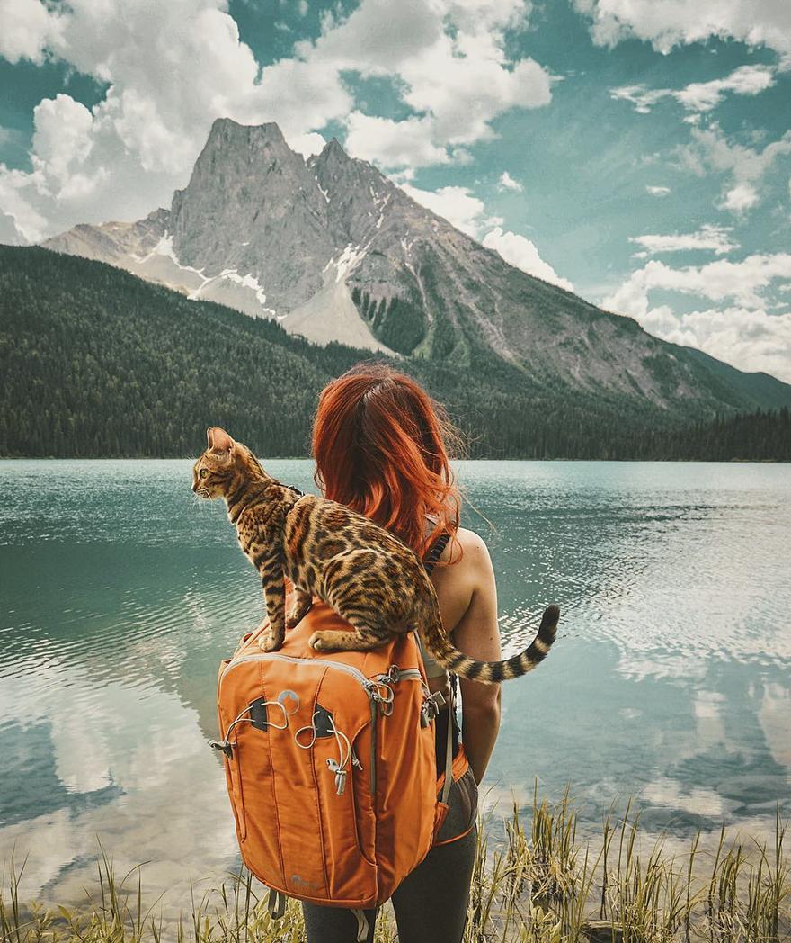 adventures-suki-the-cat-canada-14-59b29755e493c__880