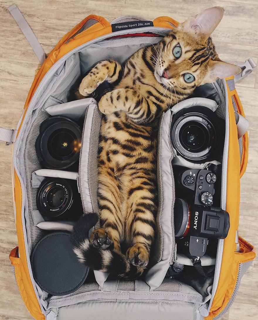 adventures-suki-the-cat-canada-15-59b2975956174__880