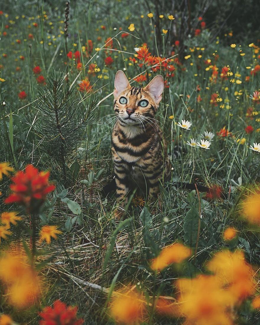 adventures-suki-the-cat-canada-17-59b29760e4903__880