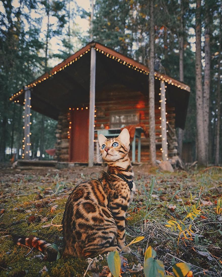 adventures-suki-the-cat-canada-2-59b2972de2e88__880