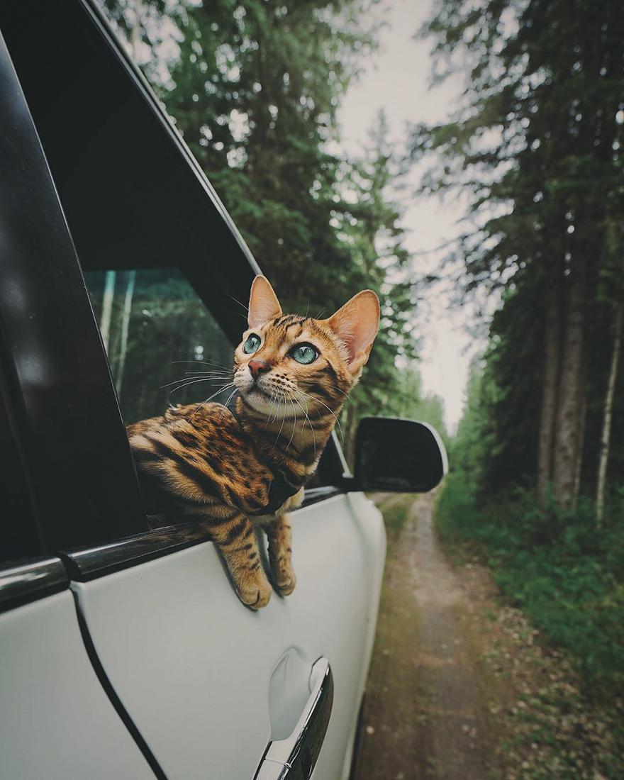 adventures-suki-the-cat-canada-29-59b2978baad3f__880