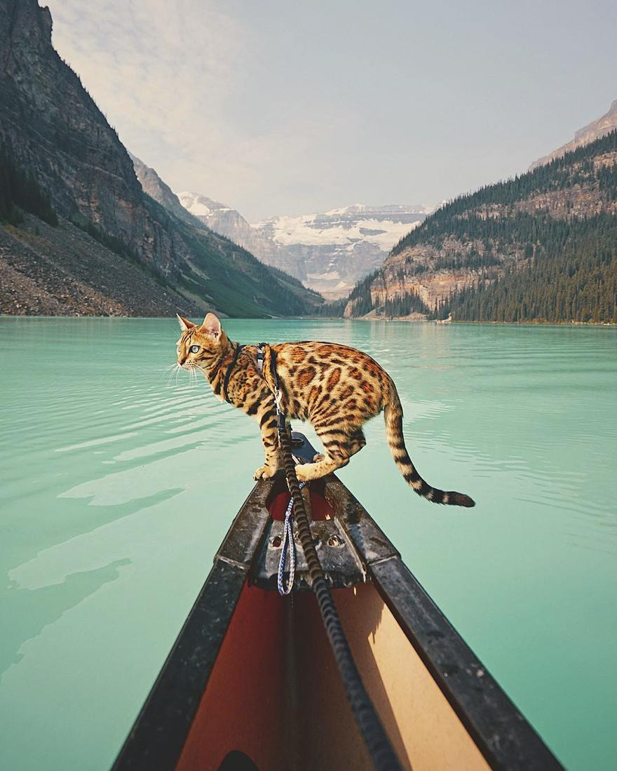 adventures-suki-the-cat-canada-45-59b297bce7a00__880