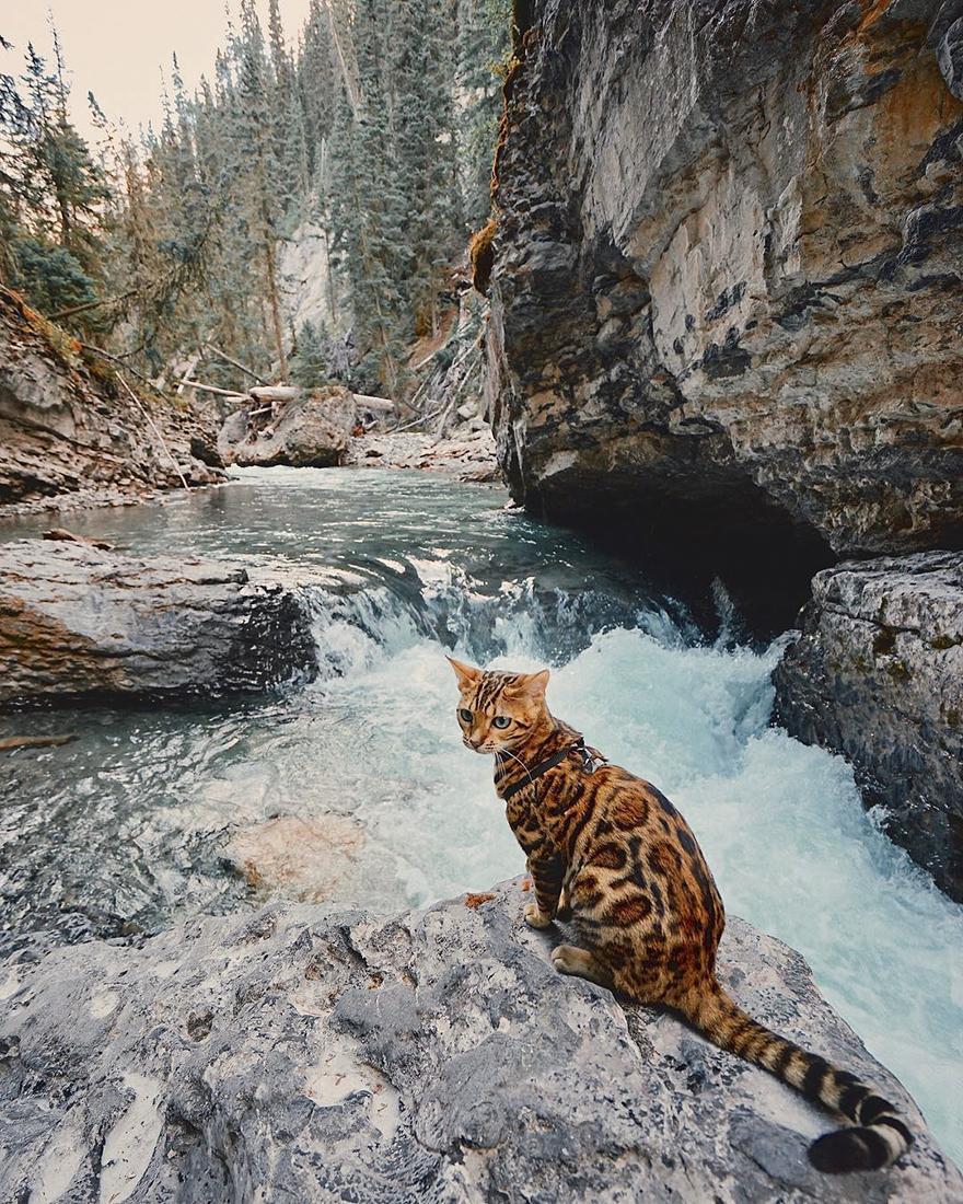 adventures-suki-the-cat-canada-55-59b297e3aa499__880