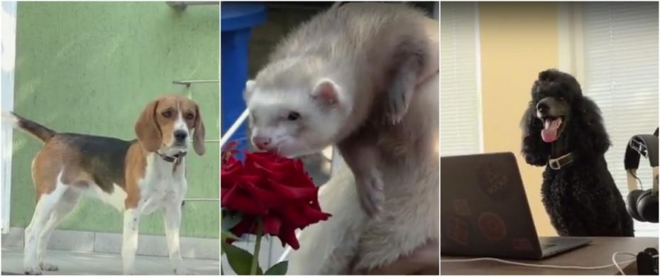 (video) Cu animalele la birou. Cum își petrec patrupezii timpul într-o companie IT din Chișinău