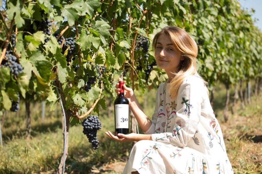 """(video) """"Fautor Winery"""" lansează o nouă serie de vinuri – 310 Altitudine"""