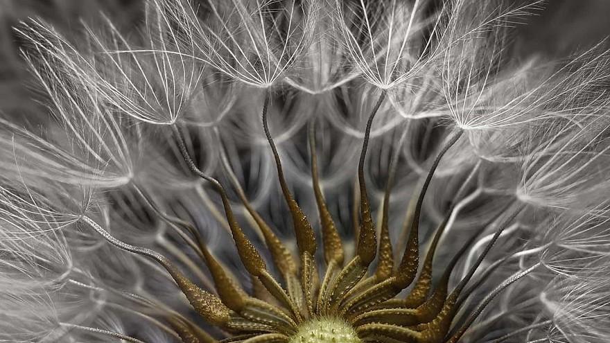 (foto) Lumea sub microscop. Au fost desemnați câștigătorii concursului Macro Photo Contest