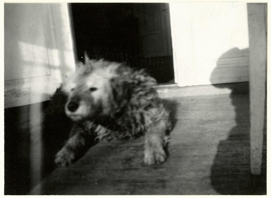 câinile lui Munch pe nume Fips Munch Museum